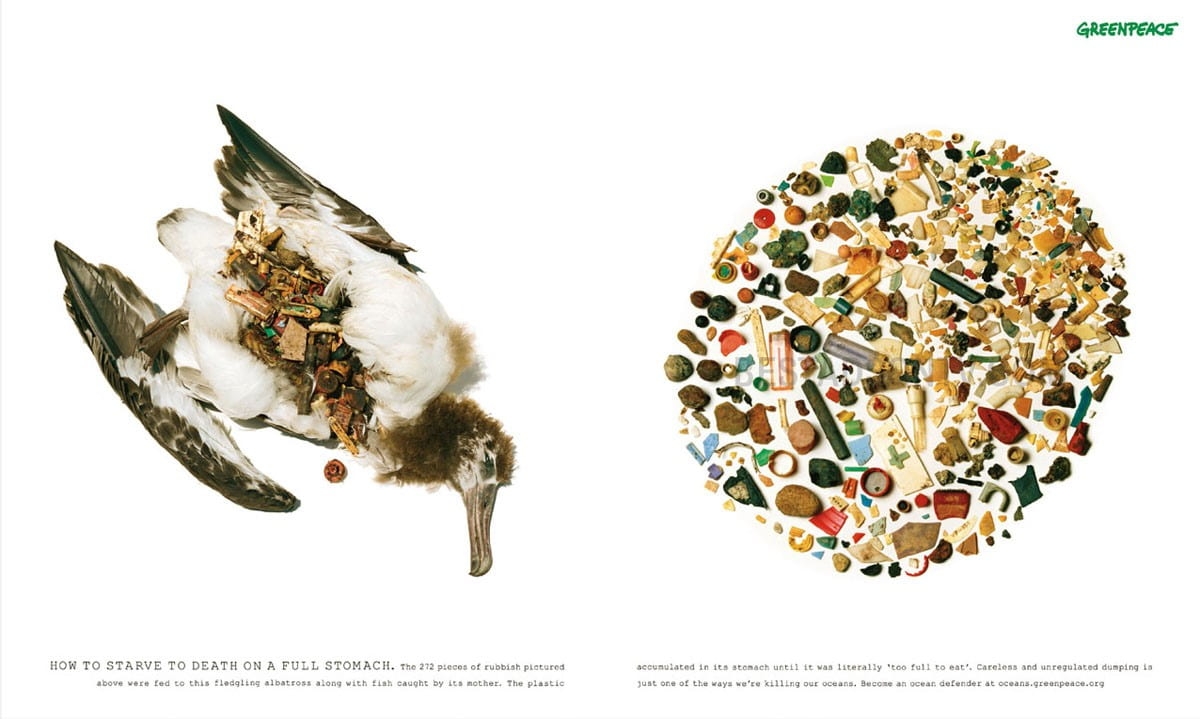 Greenpeace images showing a dead albatross and its stomach contents
